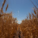 A United Nations panel of scientists says that globally, rising temperatures will make it harder for crops to thrive.