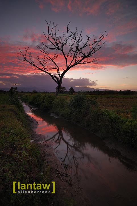 Mayantoc Sunset Bare Tree 2