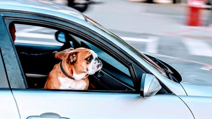 Los motivos por los que no debes dejar a tu perro en el coche