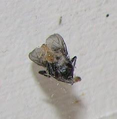 cobweb with fly