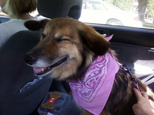 Maggie laughing all dressed in pink!