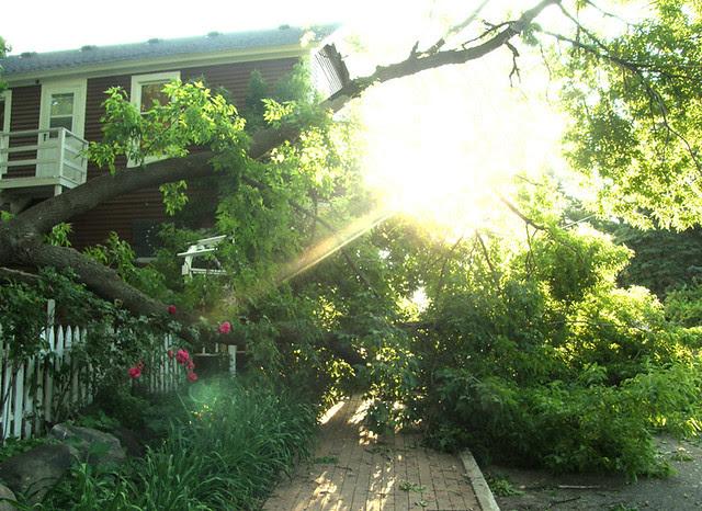 Tree crashes down