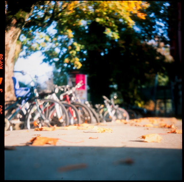 leaves and bicycles
