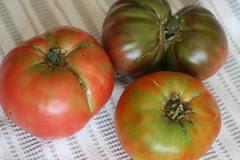 tomatoes 019