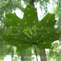 Silhouette in a leaf
