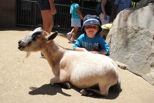 Olsen with his goat