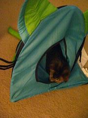 Cat tent malfunction