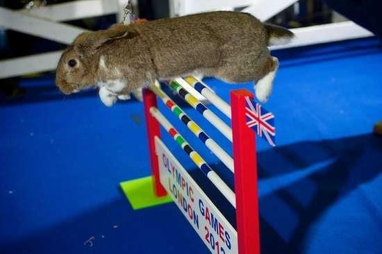 Ολυμπιακοί αγώνες για κουνέλια (6)