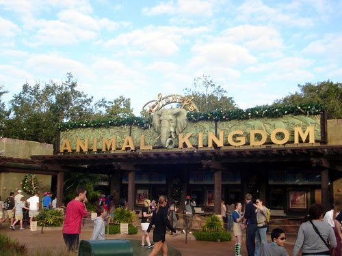 At Disney's Animal Kingdom