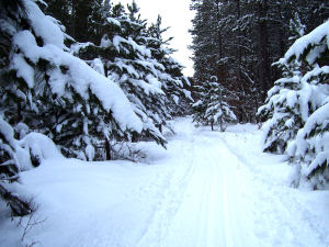 groomed trail through pines