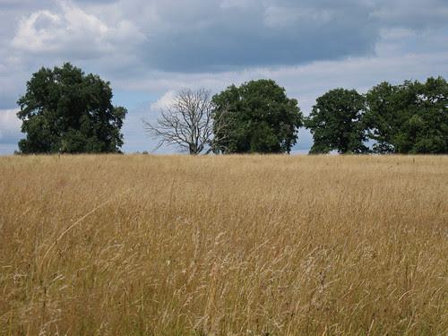 paysage bourguignon juillet 2008
