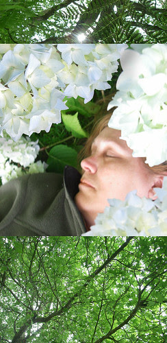 "she dreams in ""hydrangea"""