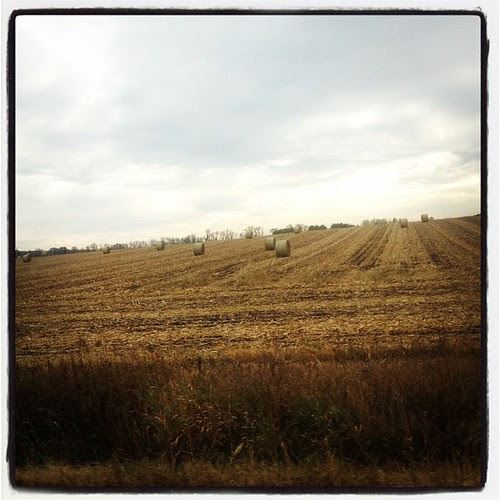 Hay bails - typical fall vista