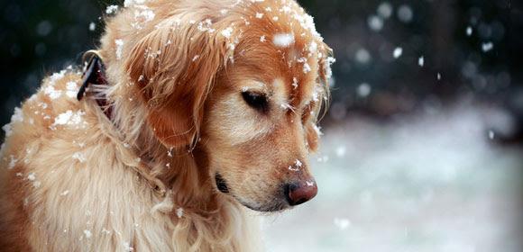 Προστάτεψε τον σκύλo σου από το κρύο
