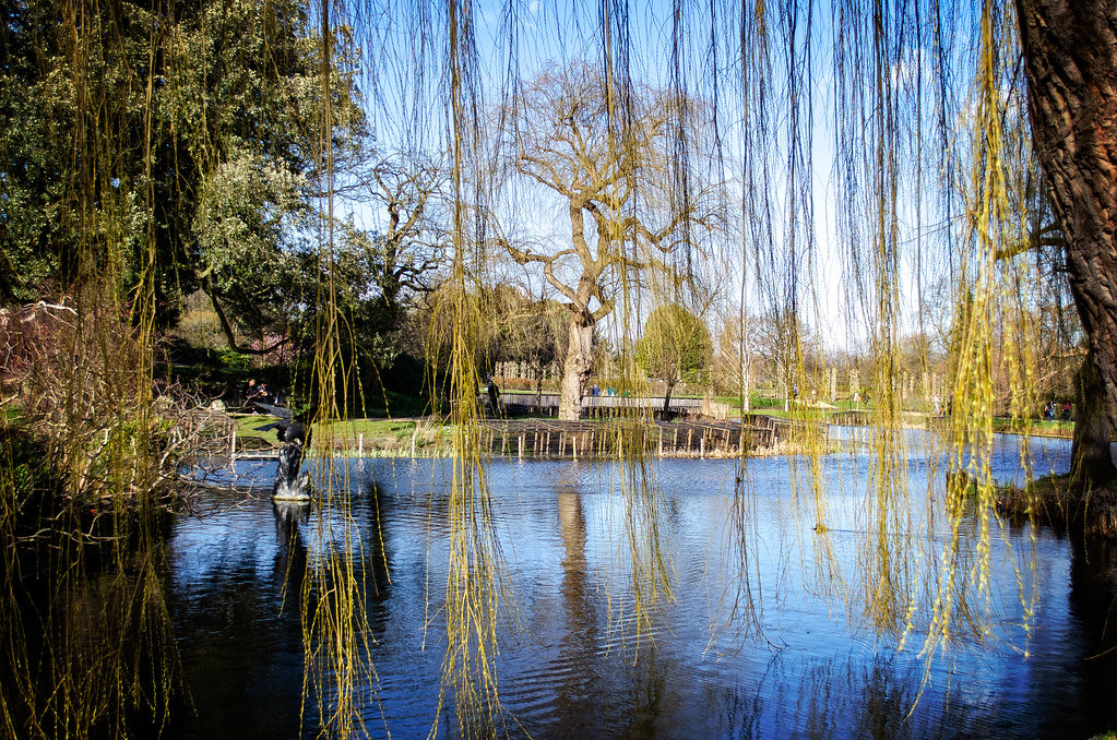 Veil of Willow