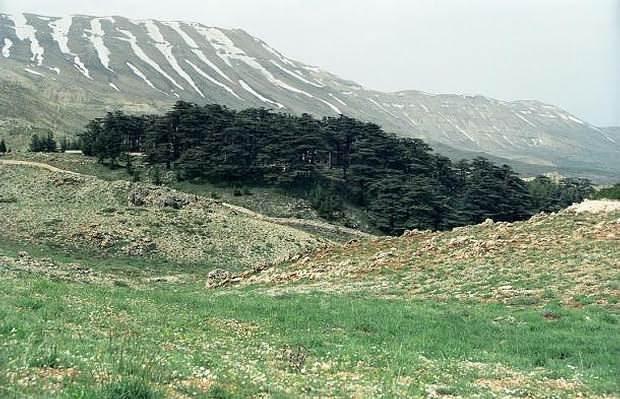 Traductores anteriores de la epopeya asumen que el Bosque de los Cedros hace referencia a un bosque de cedros en el Líbano.