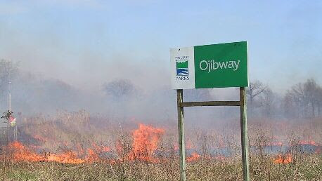 prescribed burn Ojibway prairie restoration windsor ontario ecological