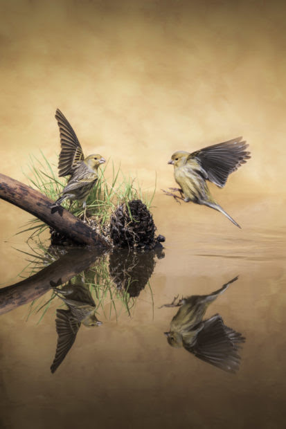 9 Inspiring Quotes For Nature Photographers The National Wildlife