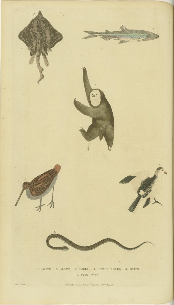 Various birds, fish, a snake, and a sloth (1785)
