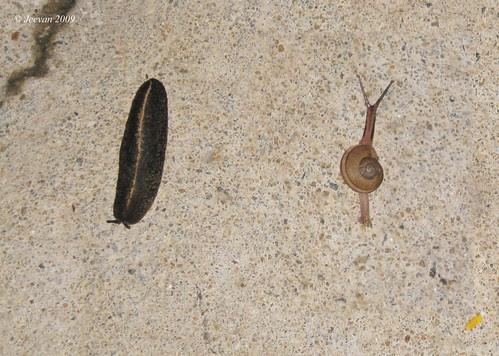 Parallel reptiles