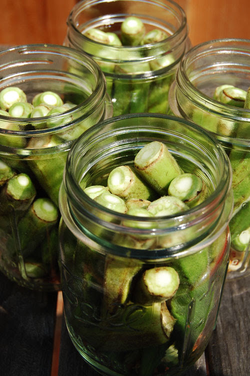 pickledokra2