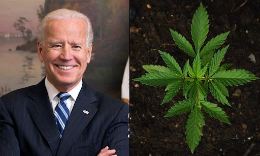 Avatar of Biden Doesn't Need To Back Marijuana Legalization, Potential VP Pick Says