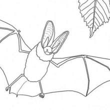 Coloriage Chauve Souris Halloween 14 Coloriages Dhalloween