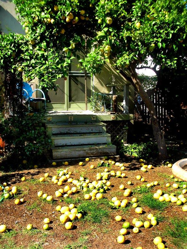 lemon yard