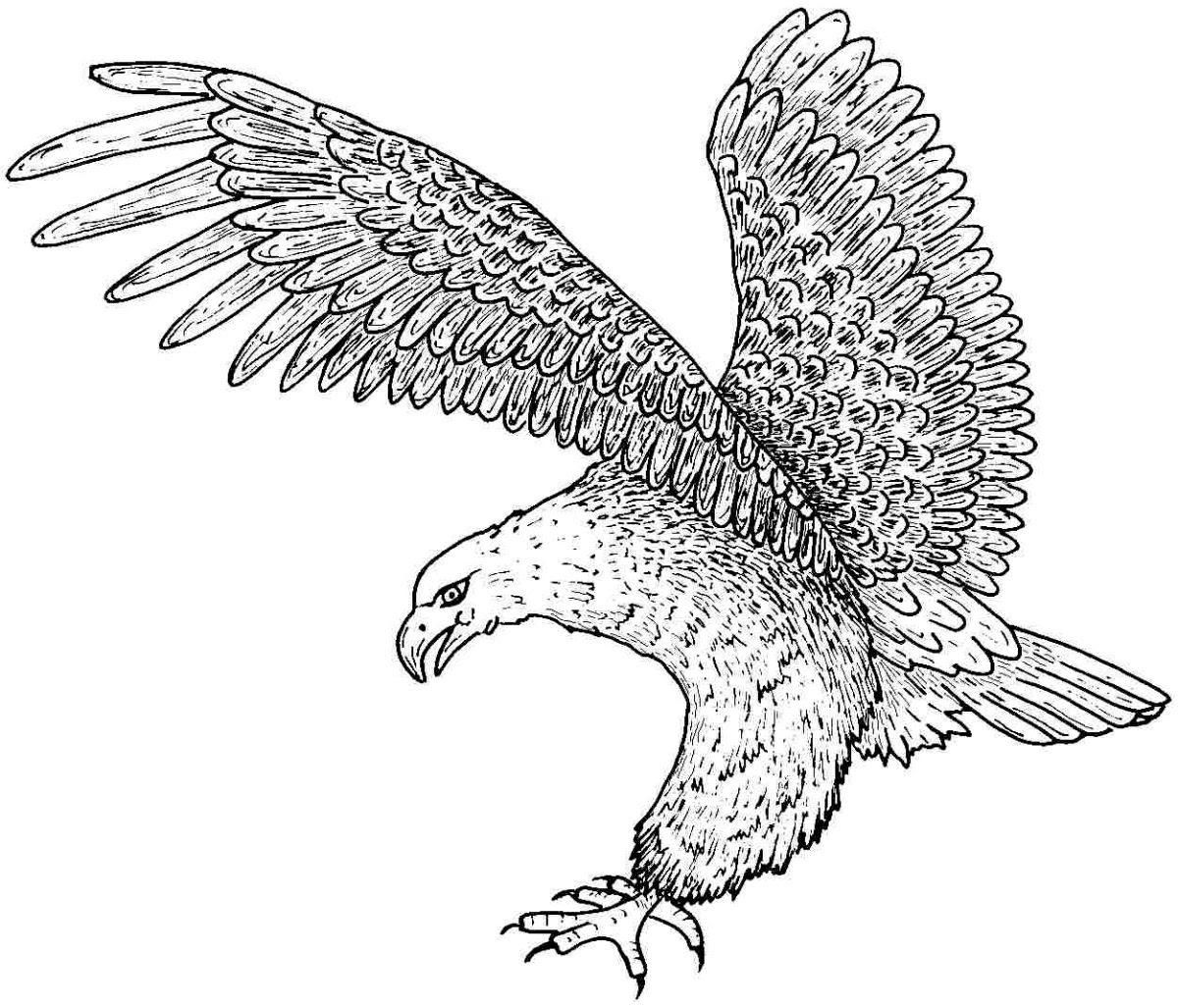 águila Con Las Alas Extendidas Para Colorear Imágenes Y Fotos