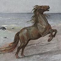 John Elliott, The great sea horse