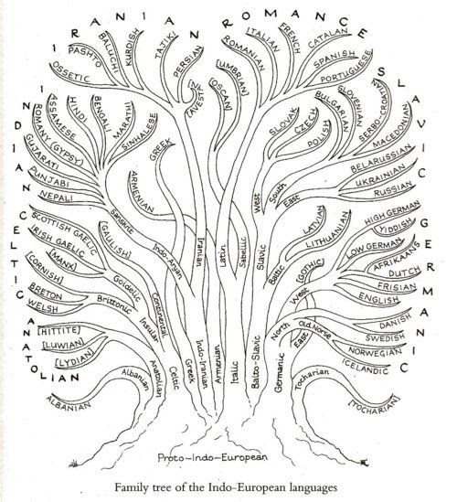 An interesting diagram showing the family tree of Indo-European languages. At the bottom is Proto-Indo-European, the reconstructed common ancestor. Its word *wel ('turn'), for example, gave rise eventually to English words including: waltz, valve, convolve, evolve, revolt, valley, helix, wallow, willow, walk and Helen ~ http://www.amazon.com/Unfolding-Language-Evolutionary-Mankinds-Invention/dp/0805079076