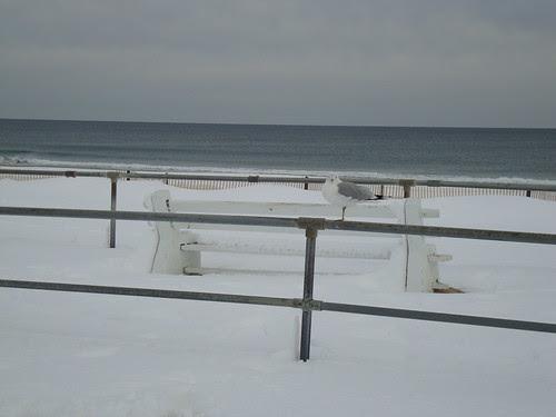 Seagull in Sea Girt, NJ 2/13/2010