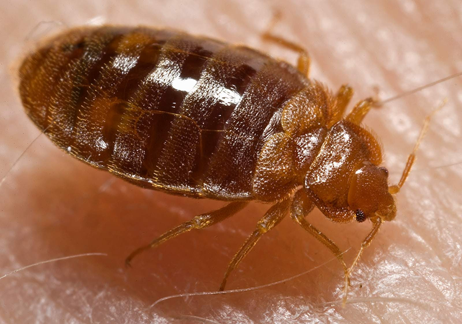 10 Worst Cities for Bed Bugs 2015  InvestorPlace