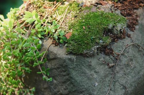 Moss on Rock