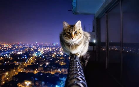 gambar wallpaper hp kucing lucu blog rahman