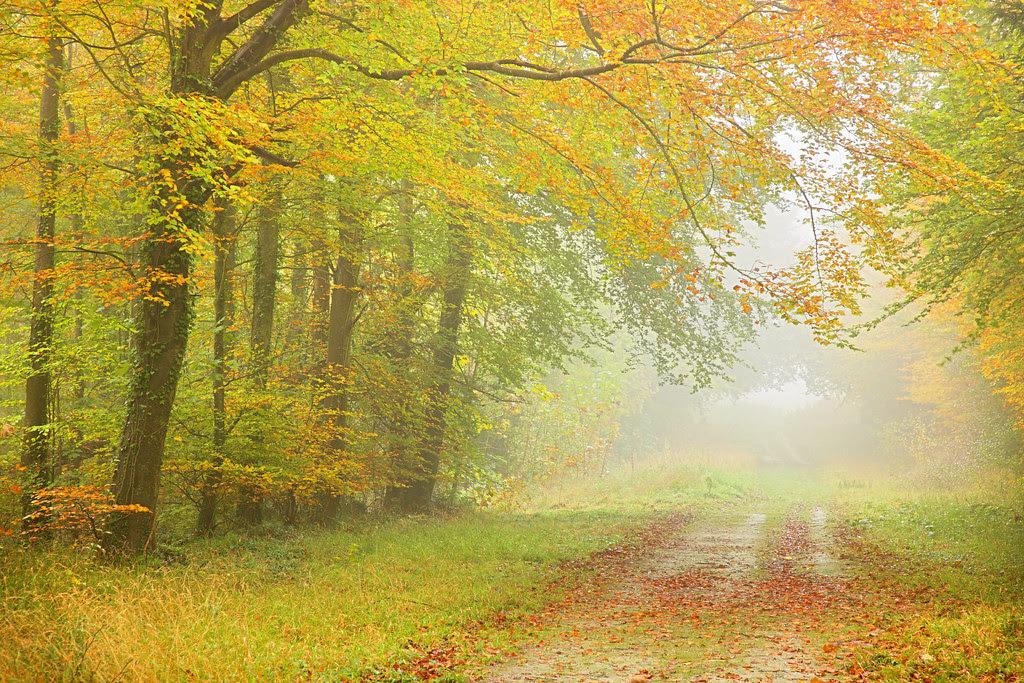 Friston Forest, Autumn Mist