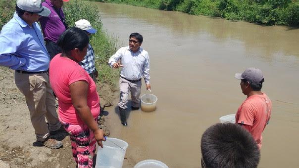Agua de rios es purificada en una hora con semillas de moringa