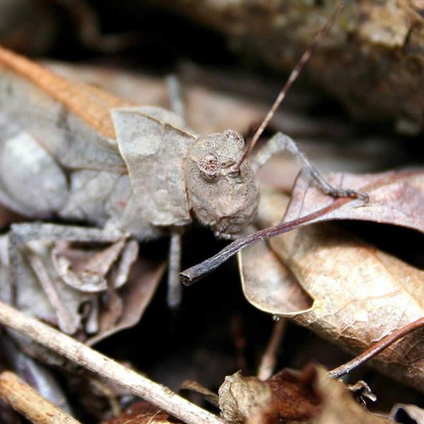 Grasshopper - Master of Camouflage Clothing