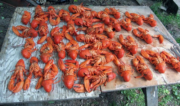 lobster-was-a-sign-of-poverty