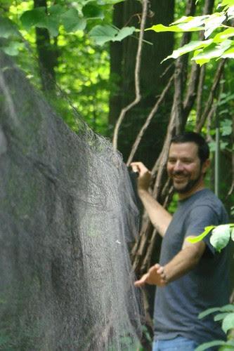 Taking nets down