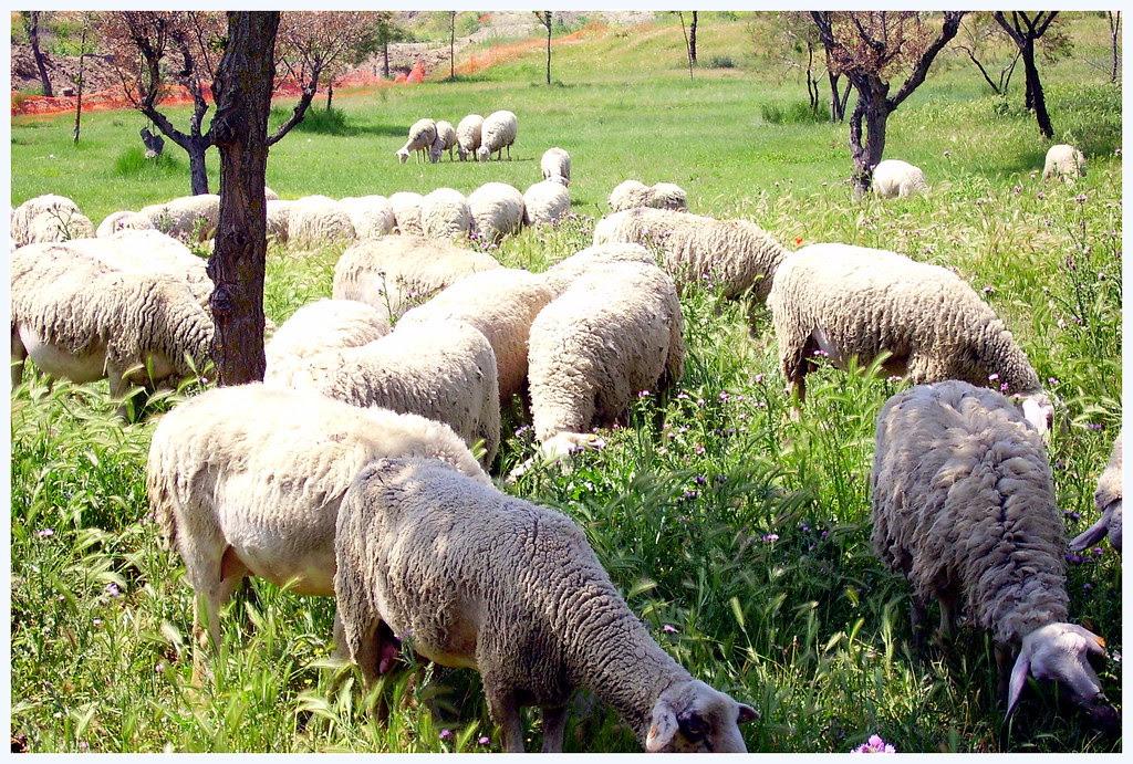Los pastores en Belén comiendo gachas