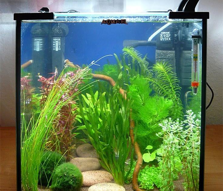 43 Ide Aquascape Design Sfa 4500 HD Gratid Yang Bisa Anda Tiru