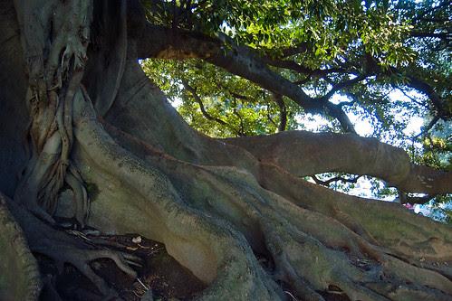 Creepy Tree Near Recoleta Cemetery