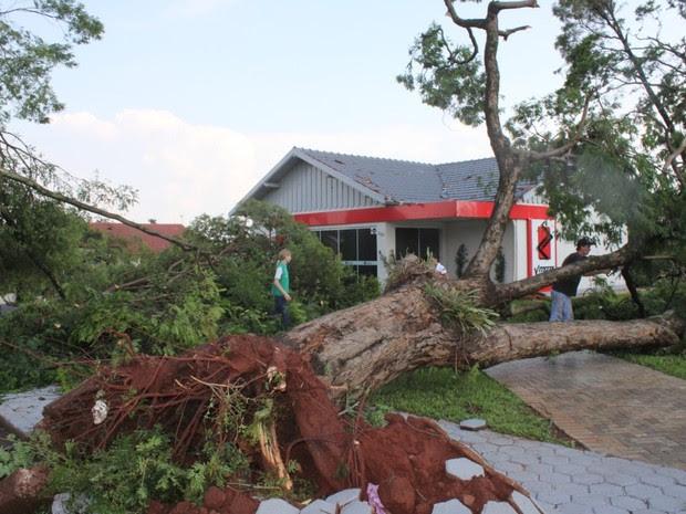 Árvores inteiras foram arrancadas pelo tornado que atingiu Marechal Cândido Rondon (PR) na tarde de quinta-feira (19) (Foto: Prefeitura de Marechal Cândido Rondon / Divulgação)
