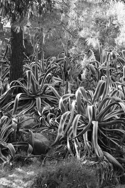 crazycactus