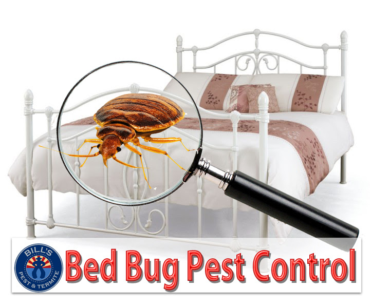 bug pest control
