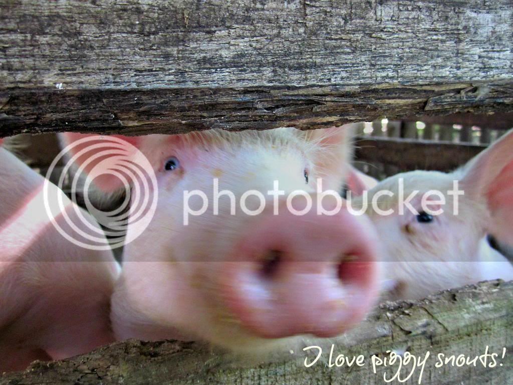 photo piggy2.jpg