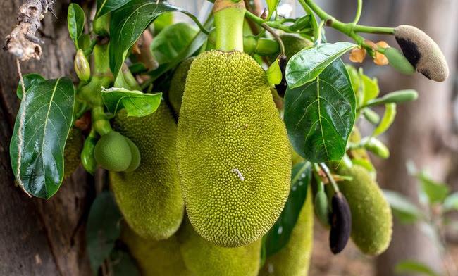 Việt Nam đang sở hữu một loại quả được mệnh danh là cứu tinh của thế giới - Ảnh 1.