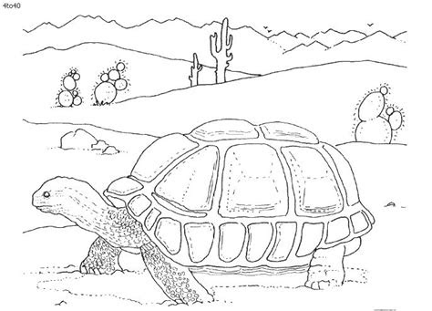 desert animals  kids coloring pages coloring pages