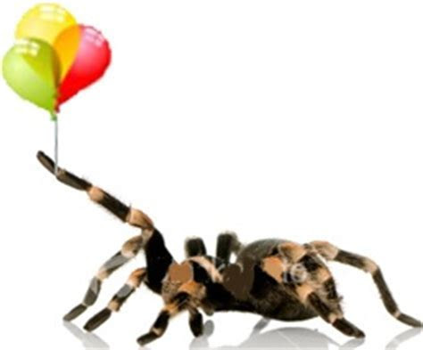 26 best images about Tarantula Birthday on Pinterest